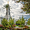 Redlands Temple Palm by La Rae  Roberts