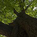 Redwood 1 by Eva Jo Wu