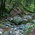 Redwood Creek Art by Ben Upham III