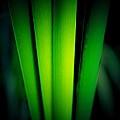 Reed Mystery  by Beth Akerman