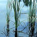 Reeds In The Water by John Brink