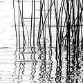 Reeds On The Turtle Flambeau Flowage by Angie Rea