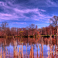 Reeds by Paul Ward