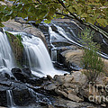 Reedy Falls by David Waldrop