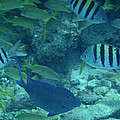Reef Fish by Kimberly Perry