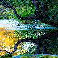 Reflected Tree In Pastel Landscape by Marie Jamieson