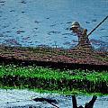 Reflecting On Rice by Valerie Rosen