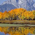 Reflection At Oxbow Bend by Sandra Bronstein