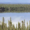 Reflection In Willow Lake Near Copper by Rich Reid