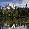 Reflection Lake And Mount Rainier by Konrad Wothe