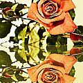 Reflection Of A Warm Rose by Barbara Griffin