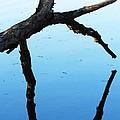 Reflections #1 by Todd Sherlock