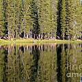Reflections Along Summit Lake by Adam Jewell