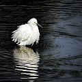 Reflections Of An Egret  by Saija  Lehtonen