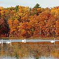 Reflections Of Autumn by Amalia Jonas