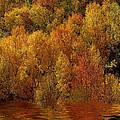 Reflections Of Autumn by Carol Cavalaris