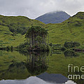 Reflections Of Loch Ailt by Denise Dempster