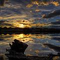 Reflections by Sam Neumann