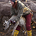 Reindeer Farm Work by Heiko Koehrer-Wagner