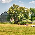 Reive Blvd Barn 15059c by Guy Whiteley