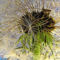 Releasing Seeds by Debbie Portwood