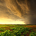 Relief by Phil Koch