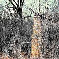 Remains by Lizi Beard-Ward