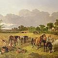 Resting Plough Team by John Frederick Herring Snr