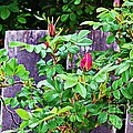Resting Rosebuds Enhanced by Barbara Griffin