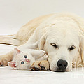 Retriever With Friendly Kittens by Mark Taylor