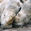 Rhino Love by CJ Clark