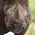 Rhino by Maggy Marsh