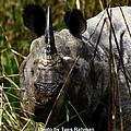 Rhino by Tues Rahman