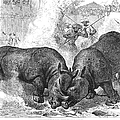 Rhinoceros Fight, 1875 by Granger