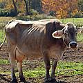 Ribs On A Skinny Cow by LeeAnn McLaneGoetz McLaneGoetzStudioLLCcom