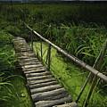 Rice Bridge by Leigh MacArthur