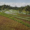 Rice Fields Jatiluwih, Bali, Indonesia by Huy Lam