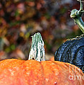 Rich Autumn Colors by Susan Herber