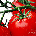 Rich Red Tomatoes by Kaye Menner