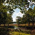 Richmond Park by Lenny Carter