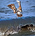 Riding The Wave  by Debra  Miller