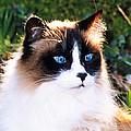 Rikki Blue Eyes by Larry Allan