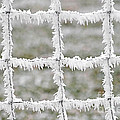 Rime Covered Fence by Christine Till