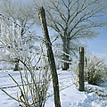 Rime From Rare Fog Coats Fence by Gordon Wiltsie