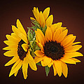 Ring Of Sunflowers by Susan Savad