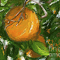 Rio Grande Valley Oranges by Dinah Anaya