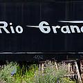 Rio Grande by Vicki Pelham