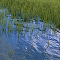 Rippling Water Among Aquatic Grasses by Heather Perry
