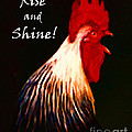 Rise And Shine - Rooster Clucking - Painterly by Wingsdomain Art and Photography