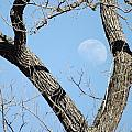 Rising Moon by Shannon Bever